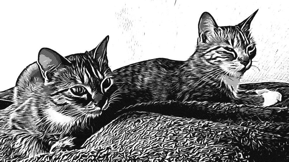 Manon et Choupette
